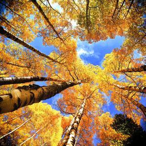 colorado-autumn-sky-olena-art